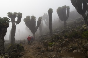 Members of the team climb into the mist