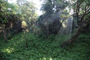Day 2 is a trek through part of Kilimanjaro's beautiful rainforest